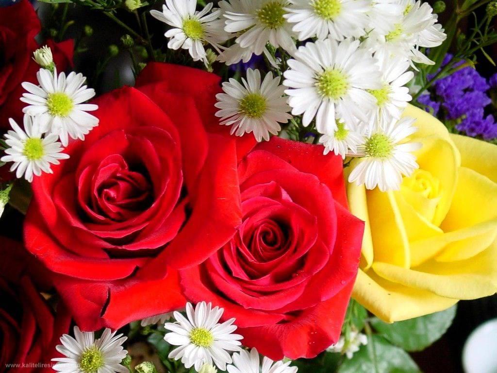 ... розы и ромашки / 1590 / Теги : розы: prikolnyestatus.at.ua/load/cvety_rozy/buket_krasivye_rozy_i...