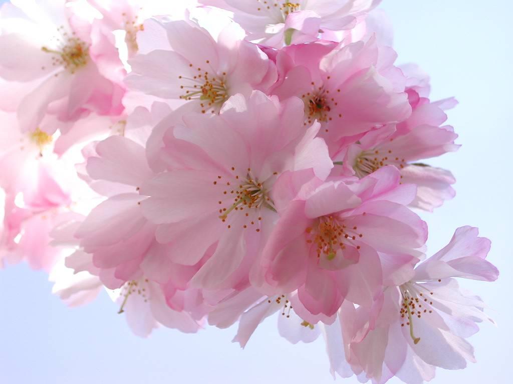 Самые нежные цветы весны