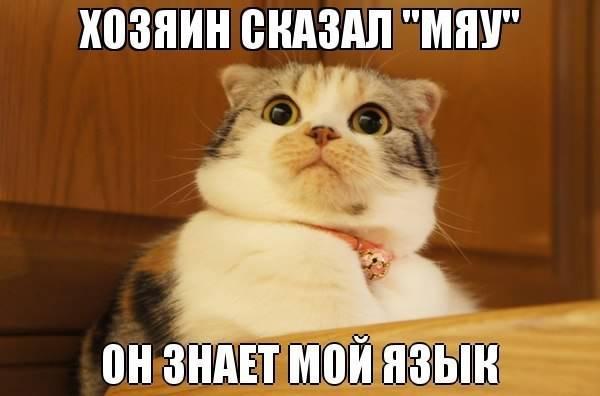 Хозяин сказал мяу, он знает мой язык...: prikolnyestatus.at.ua/load/zhivotnye/3-3