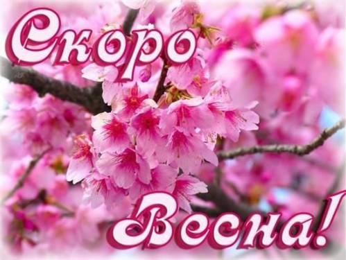 Картинки цветок георгина